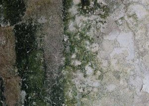Mold Cleanup Everett Wa