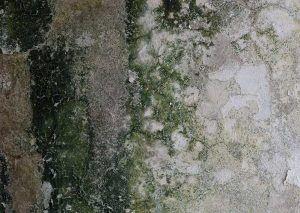 Mold Cleanup [City] Wa