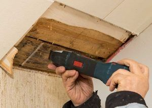 mold remediation Edmonds WA